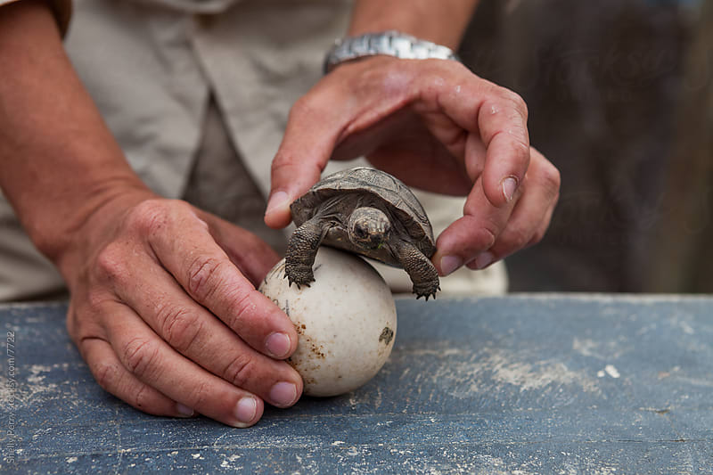 Baby Tortoise by Shelly Perry for Stocksy United