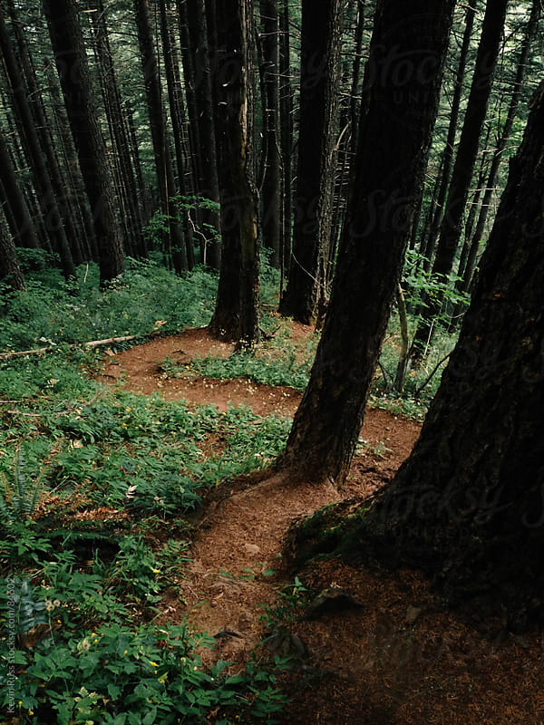 Winding Trail Through Forest by Kevin Russ for Stocksy United