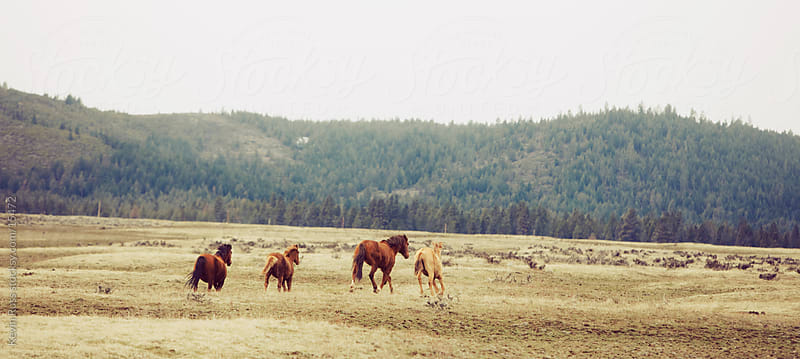Oregon Wilderness Horses by Kevin Russ for Stocksy United