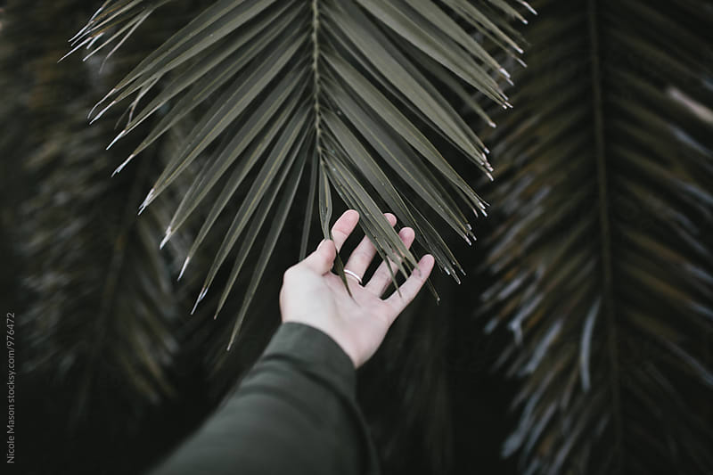 hand holding part of palm frond by Nicole Mason for Stocksy United