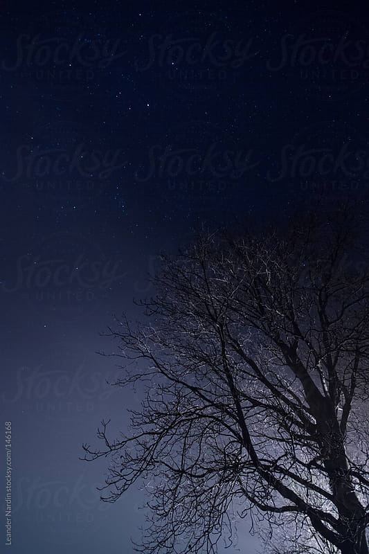 illuminated tree under spangled sky by Leander Nardin for Stocksy United