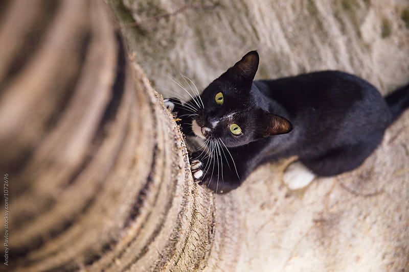 close-up of cat sharpening its claws on tree trunk by Andrey Pavlov for Stocksy United