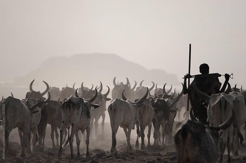Afar Herdsman, Ethiopia by Anthon Jackson for Stocksy United