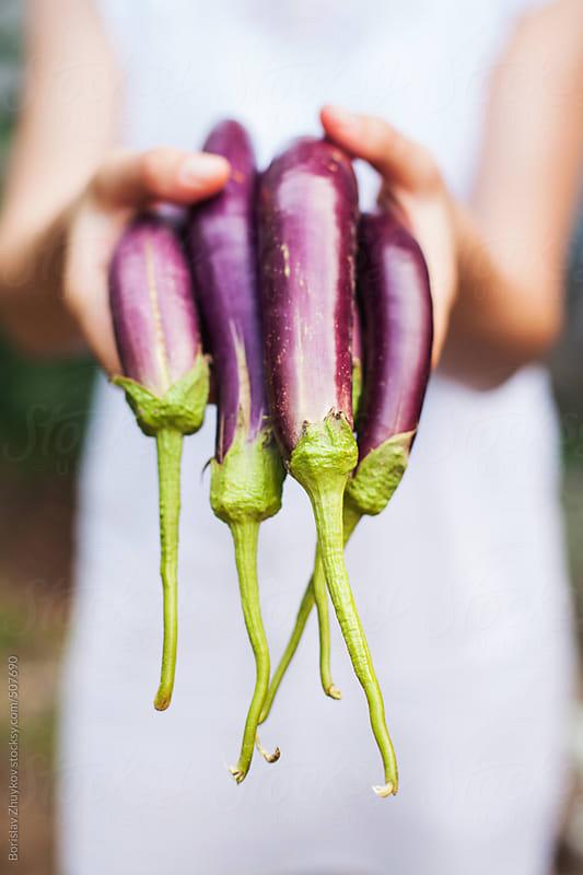Female Holding Fresh Purple Organic Japanese Eggplant by Borislav Zhuykov for Stocksy United