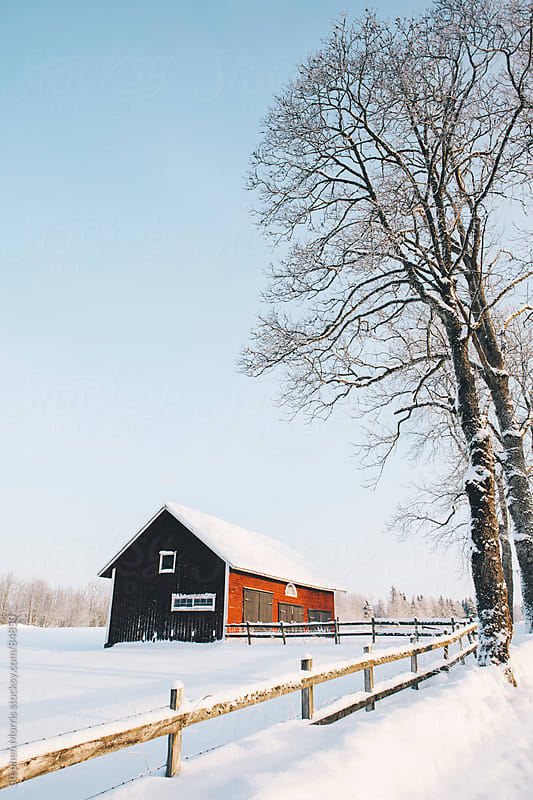 Red Barn in Snowy Swedish Landscape by Stephen Morris for Stocksy United