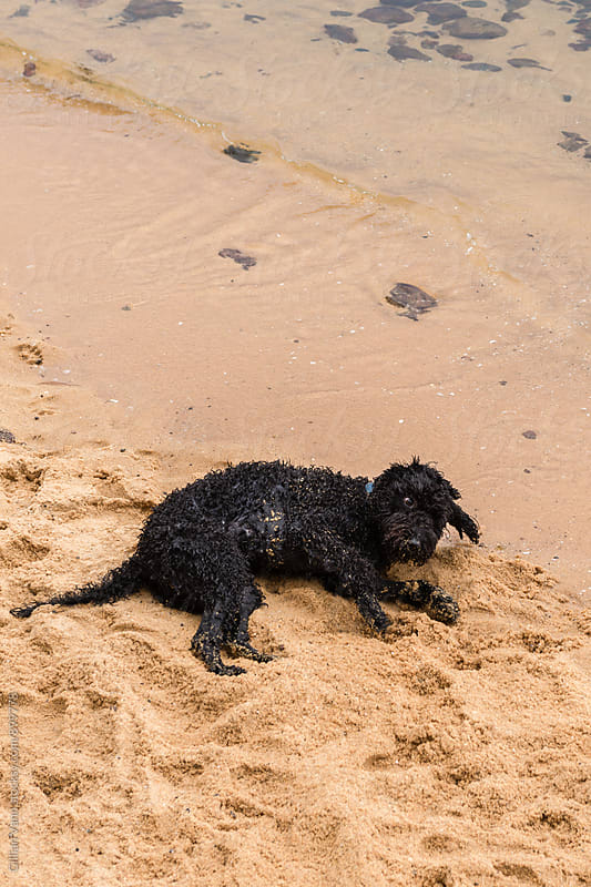 happy dog in the sand at the beach by Gillian Vann for Stocksy United