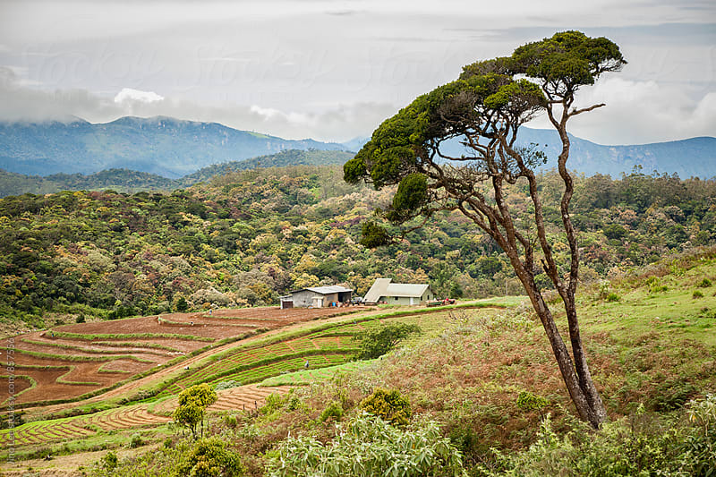 Farm in Nuwara Eliya by Jino Lee for Stocksy United