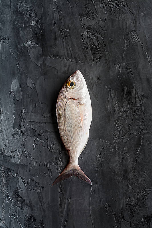 Sea bream on a cement background  by KEMA Food Culture for Stocksy United