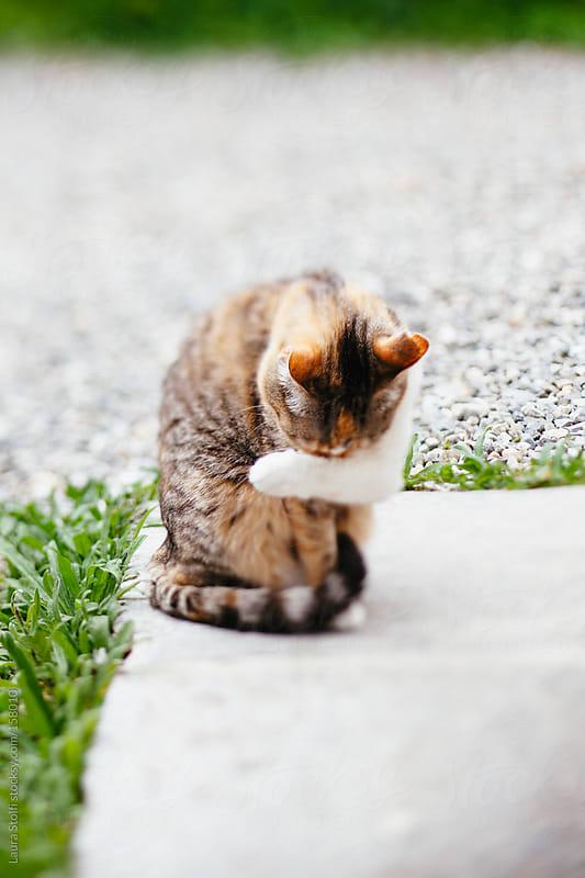 Tilt shift portrait of cat in sunny garden by Laura Stolfi for Stocksy United