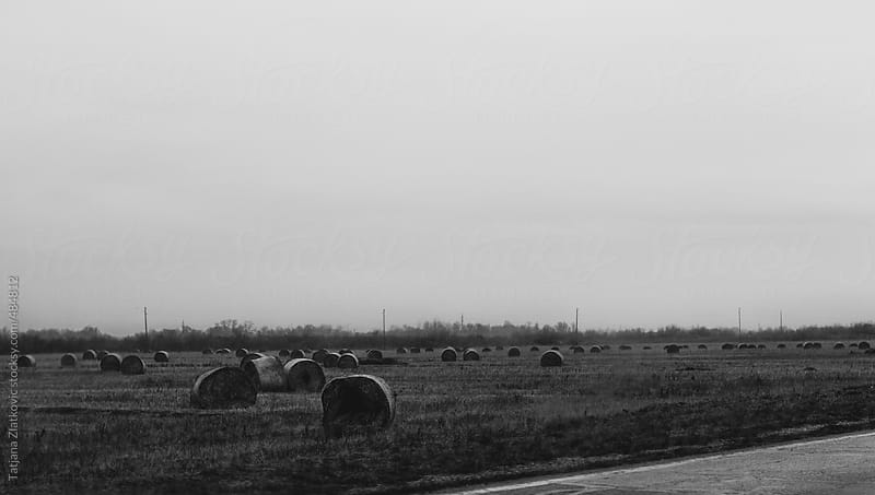 Field of round bales by Tatjana Zlatkovic for Stocksy United
