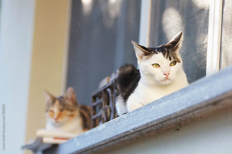 Two cats enjying the sun while laying on windowsill by Laura Stolfi for Stocksy United