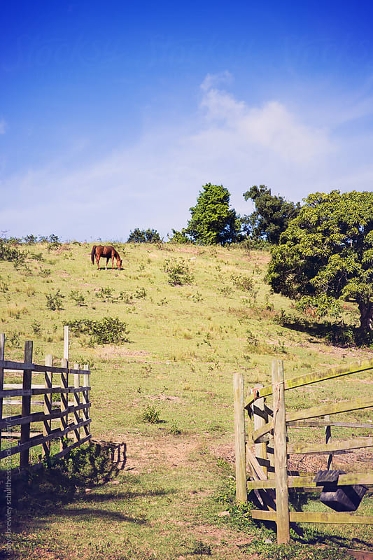 Horses on a vibrant green hill by anya brewley schultheiss for Stocksy United