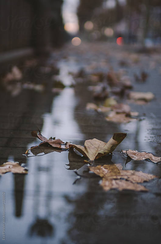 Wet leaves on the floor in a puddle. by Eva Plevier for Stocksy United