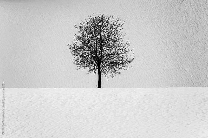 Single tree in the field by Dimitrije Tanaskovic for Stocksy United
