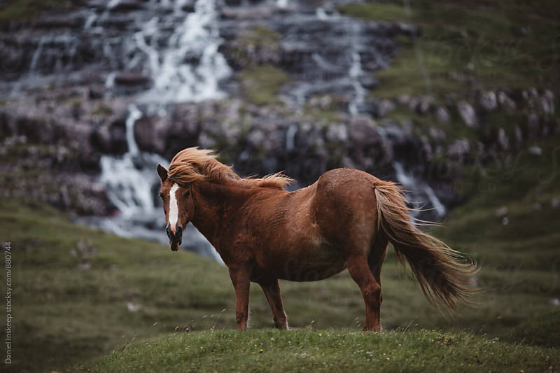 A Pony Standing in Front of a Waterfall Backdrop by Daniel Inskeep for Stocksy United