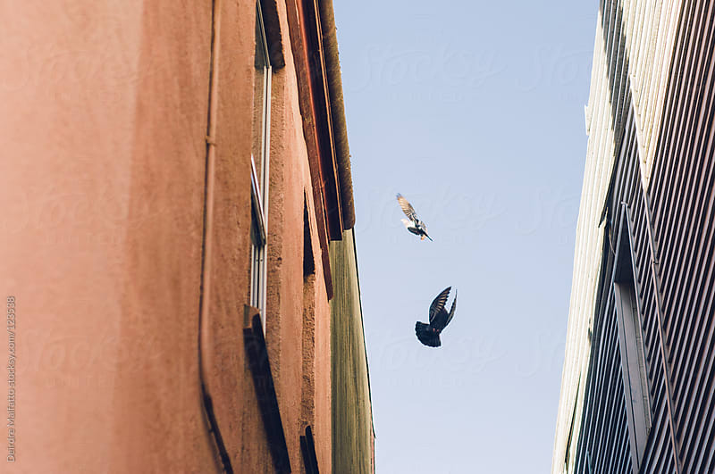 two pigeons flying up out of an alleyway by Deirdre Malfatto for Stocksy United