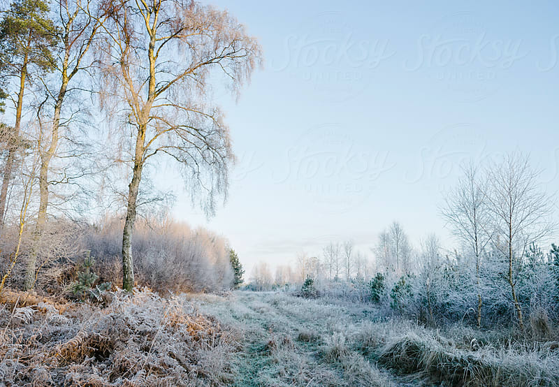 Frost covered winter scene at sunrise.  by Liam Grant for Stocksy United