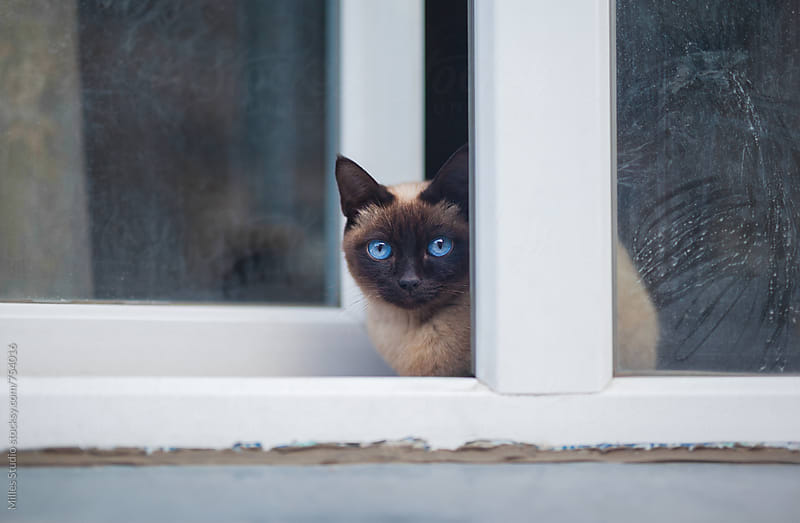 Cat on the window by Milles Studio for Stocksy United