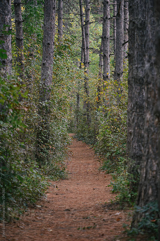 Forest path by Pixel Stories for Stocksy United