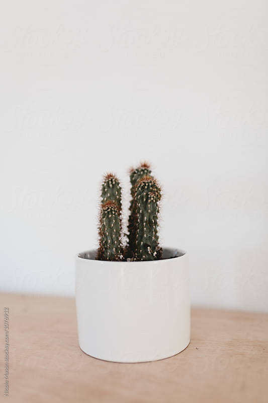 cactus plant succulent in white pot on wood table by Nicole Mason for Stocksy United