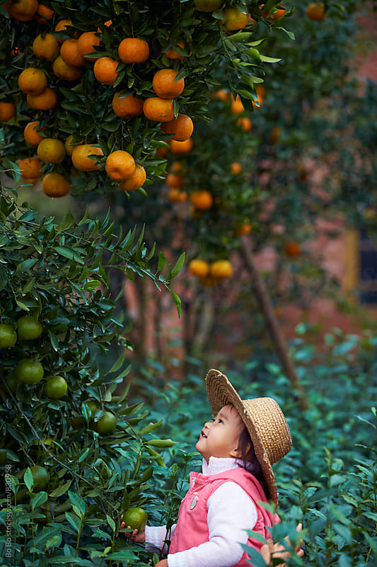 little asian girl looking up under the orange tree by Bo Bo for Stocksy United