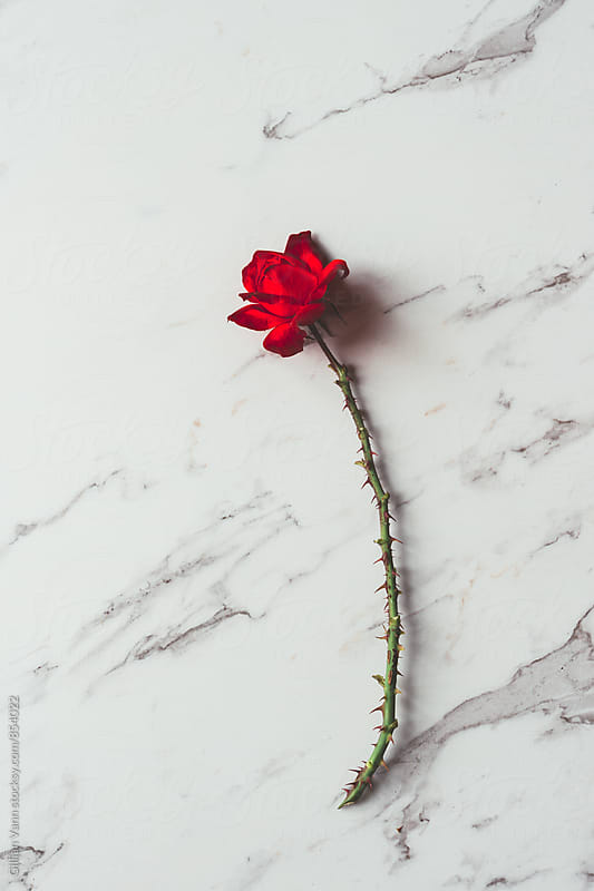 red rose with thorns on a marble background by Gillian Vann for Stocksy United