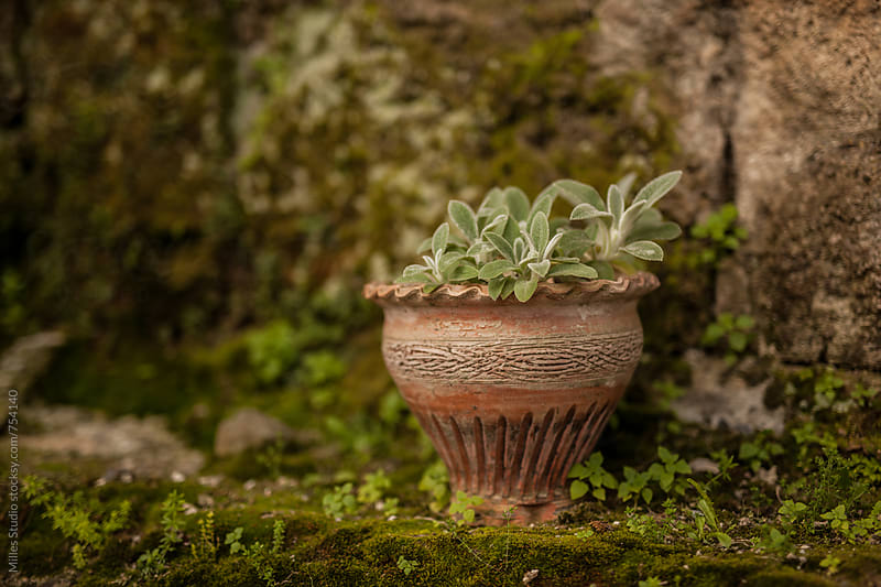 Old clay pot by Milles Studio for Stocksy United