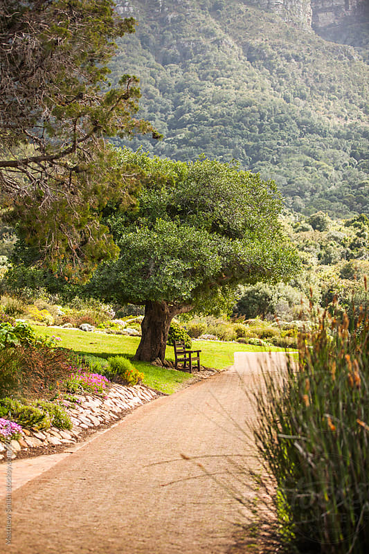 A Lone Tree In A South Africa Garden by Matthew Smith for Stocksy United
