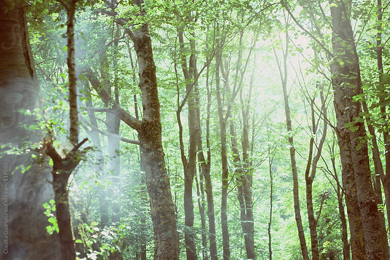 In the wood by Claudia Guariglia for Stocksy United