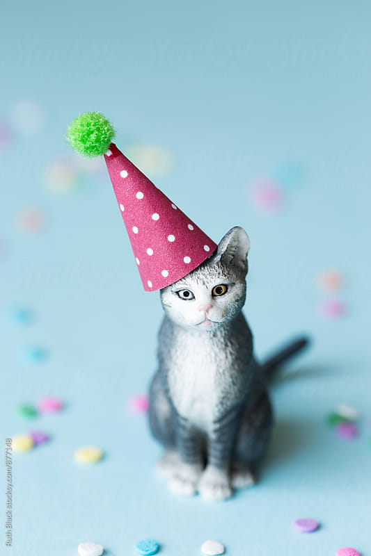 Toy cat wearing a party hat by Ruth Black for Stocksy United