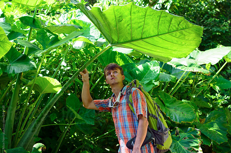 Young man under insanely big green leaf in tropics by Alice Nerr for Stocksy United