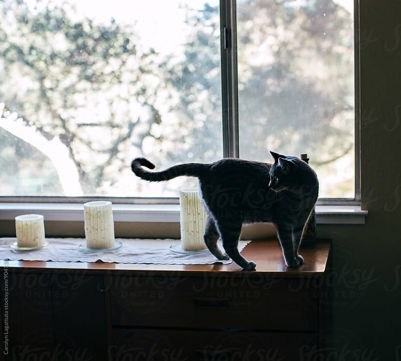 Cat standing on a dresser in a bedroom by Carolyn Lagattuta for Stocksy United