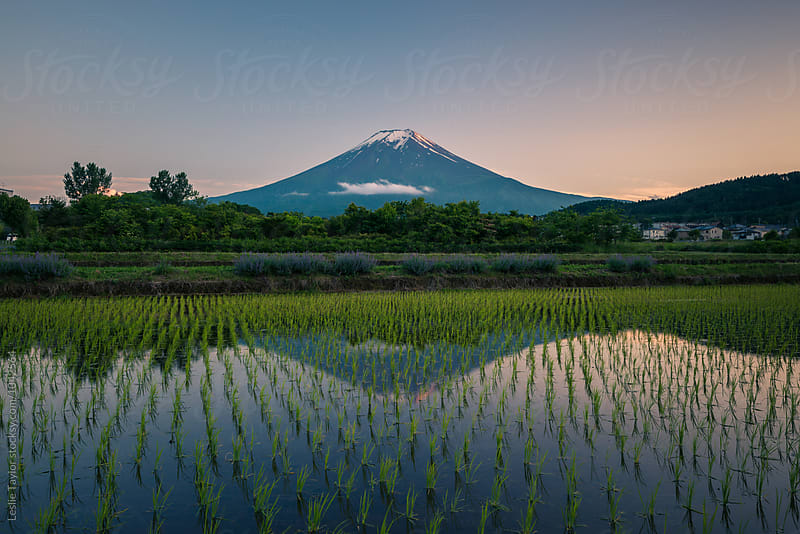 Mt Fuji And Rice Fields by Leslie Taylor for Stocksy United