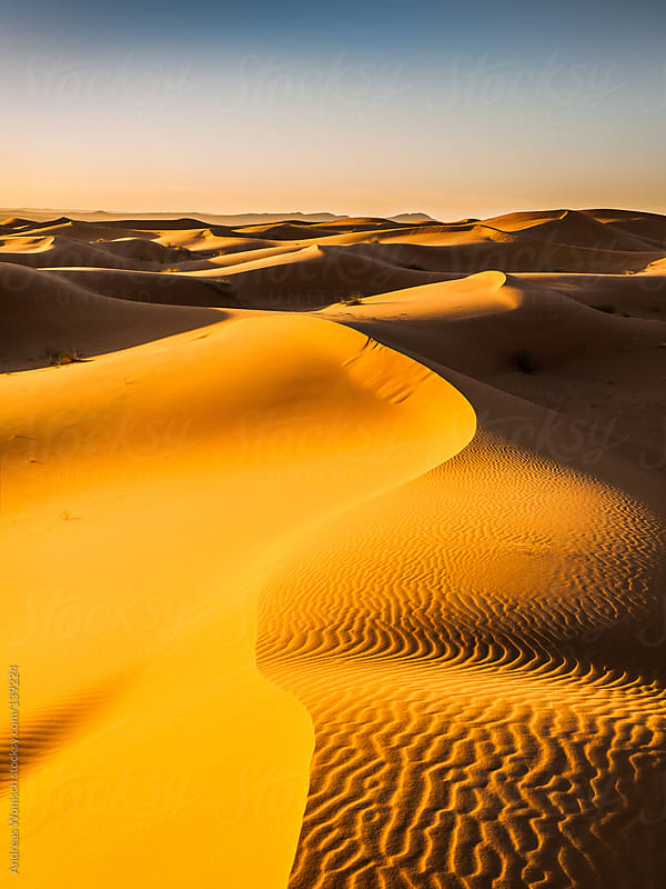 Endless Sand Dunes in the Desert after Sunrise by Andreas Wonisch for Stocksy United