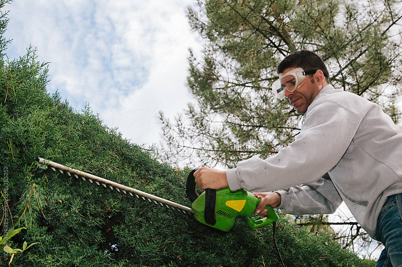 Man Pruning the Arizona Cypress by VICTOR TORRES for Stocksy United