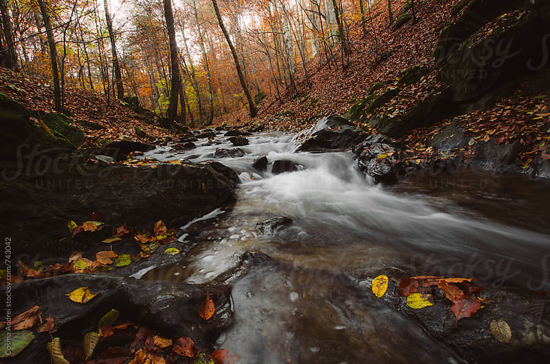 River flowing trough autumn forest by Cosma Andrei for Stocksy United