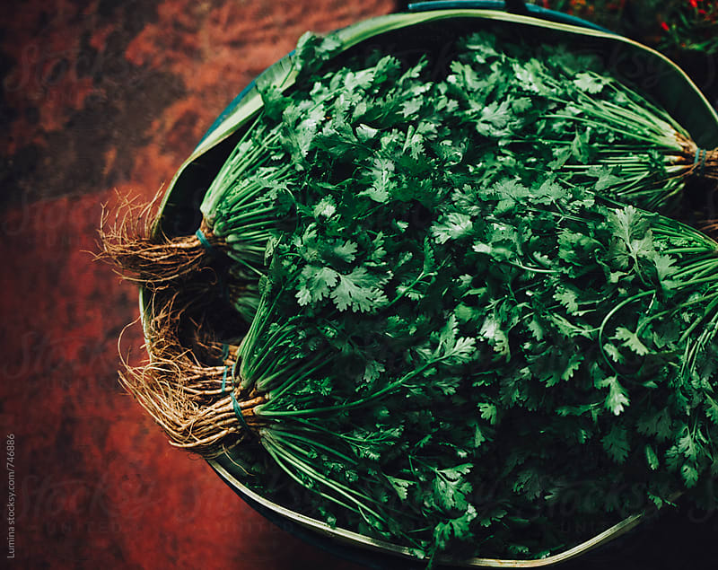 Fresh Parsley on Sale by Lumina for Stocksy United
