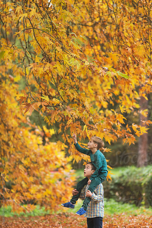 Boys picking autumn leafs by Dejan Ristovski for Stocksy United