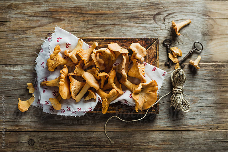 Chanterelle mushrooms by Tatjana Ristanic for Stocksy United