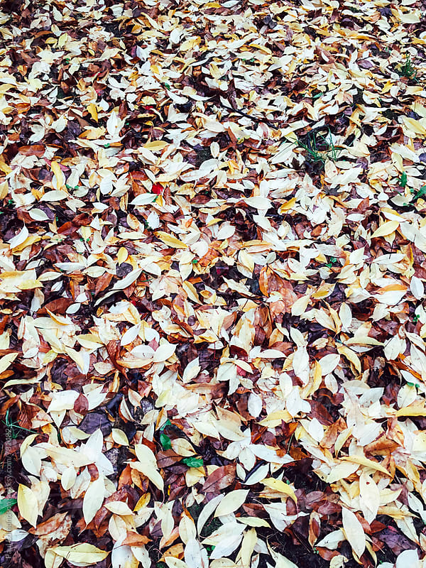 Pile of wet leaves in autumn by Paul Edmondson for Stocksy United