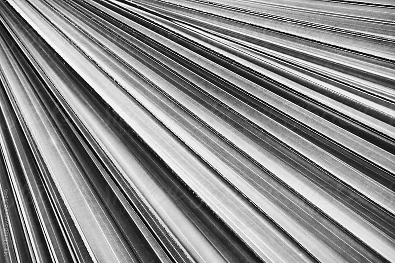 palm leaf abstract detail in b&w by Marcel for Stocksy United
