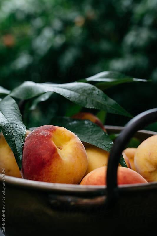 Freshly picked peaches in a bowl by Gabriel (Gabi) Bucataru for Stocksy United