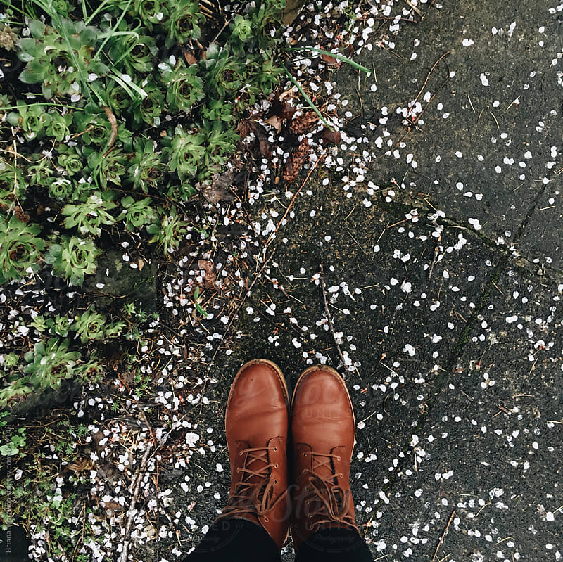 Two Feet in Brown Boots Standing on a Sidewalk Strewn with Petals Next to Succulents by Briana Morrison for Stocksy United