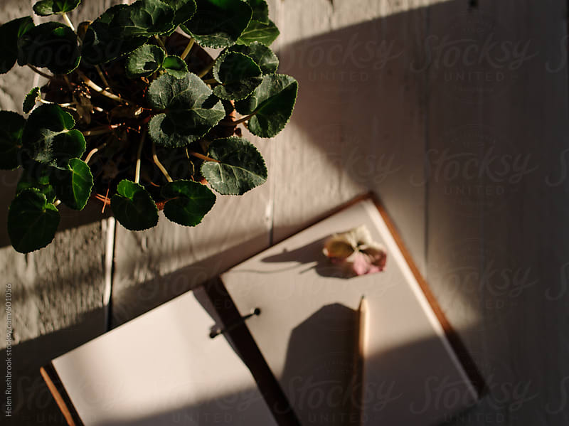A cyclamen plant and notebook on a sunny table. Focus is on the plant. by Helen Rushbrook for Stocksy United