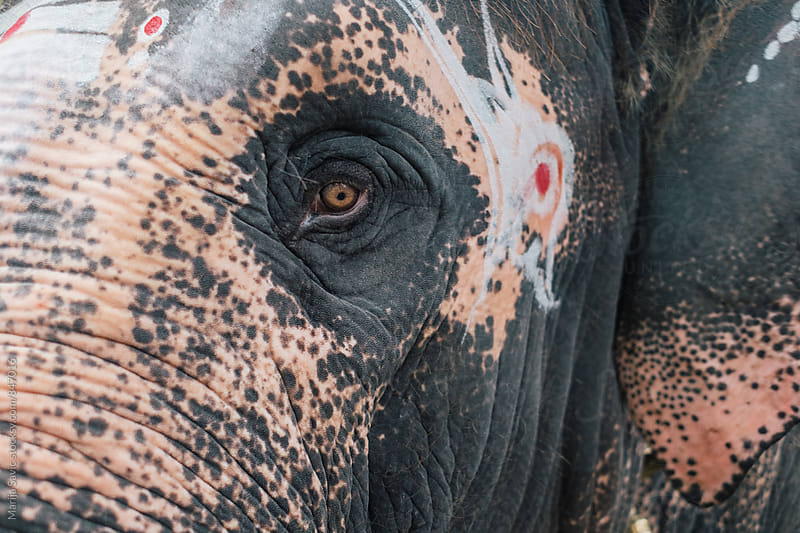 Close up of Painted Elephant  by Marija Savic for Stocksy United