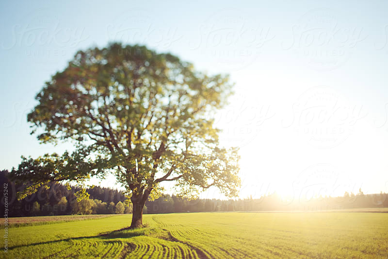 Country Sunset Field Tree by Kevin Russ for Stocksy United