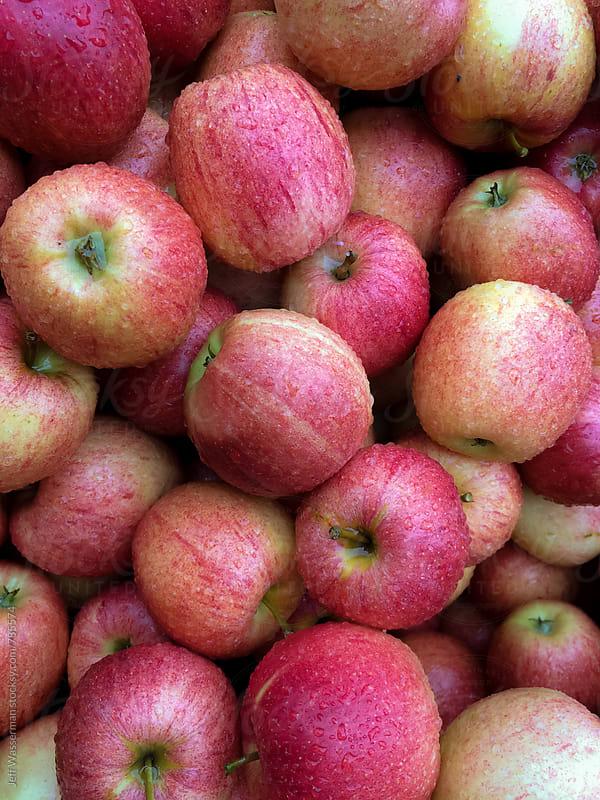 Fresh Apples Wet from Rain by Jeff Wasserman for Stocksy United