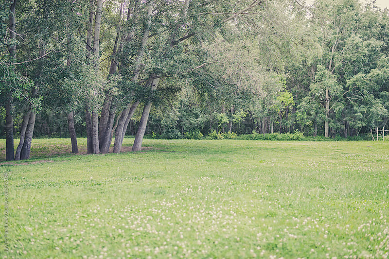 green meadow with trees by Javier Pardina for Stocksy United