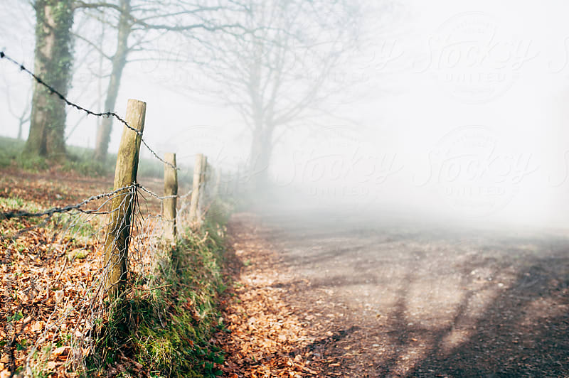 Barbed wire fence on a foggy day by Suzi Marshall for Stocksy United