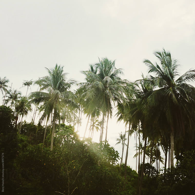 Sun shining through the palm trees by Benj Haisch for Stocksy United